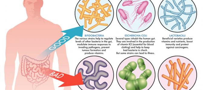 Finding the Best of Prebiotics Supplement